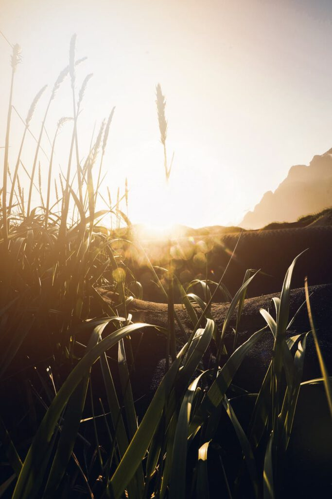 green grass in sunset light
